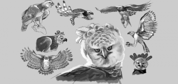 Drawing Study – Harpy Eagle