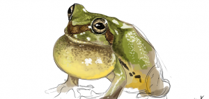 Daily Paint 255